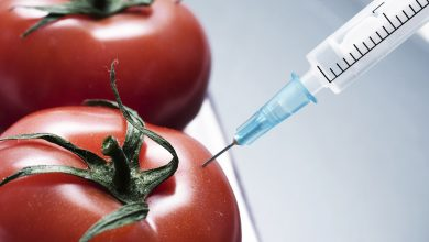 Photo of Genetic Engineering & Your Food: What Are The Risks?