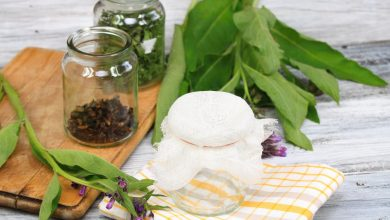 Photo of Medicinal Herbs For Circulation And The Nervous System