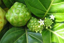 Photo of Unlocking The Secrets Of Tahitian Noni (Morinda Citrifolia)