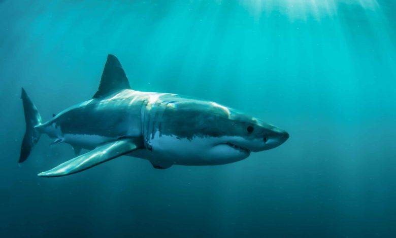 sharks cancer