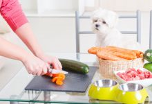Photo of Healthy Pets With The Raw Food Diet