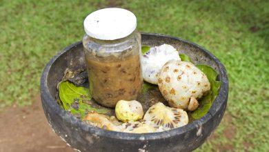Photo of Health Benefits Of Morinda Citrifolia: Tahitian Noni Juice